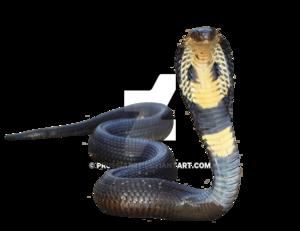 King Cobra Transparent Background PNG Clip art