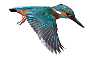 Kingfisher Background PNG PNG Clip art