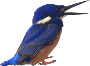 Kingfisher PNG Pic PNG Clip art