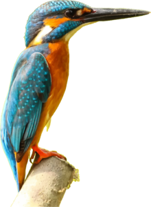 Kingfisher PNG Picture PNG Clip art