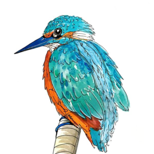 Kingfisher PNG Transparent Picture PNG icons