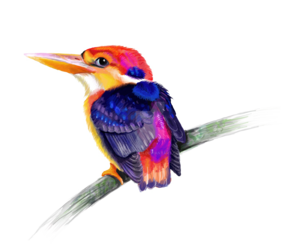 Kingfisher PNG Transparent PNG Clip art