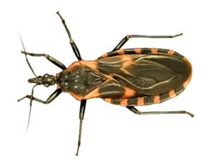 Kissing Bug PNG Photos PNG Clip art
