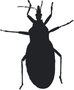 Kissing Bug Transparent Background PNG Clip art