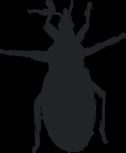 Kissing Bug Transparent Background PNG Clip art
