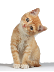 Kitten PNG Clipart PNG Clip art