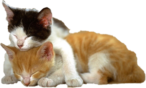 Kitten PNG File PNG Clip art