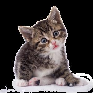 Kitten PNG Transparent Image PNG Clip art