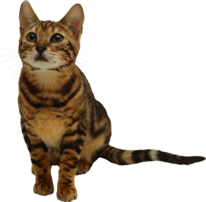 Kitten Transparent PNG PNG Clip art