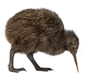Kiwi Bird PNG Transparent Image PNG Clip art