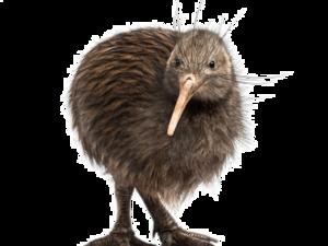 Kiwi Bird Transparent Background PNG Clip art