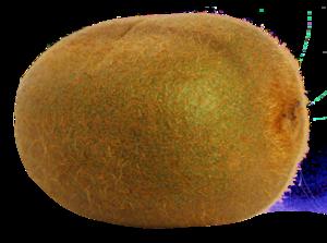 Kiwi Fruit PNG File PNG Clip art