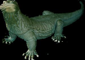Komodo Dragon PNG Clipart PNG Clip art