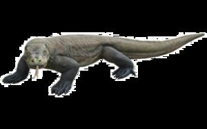 Komodo Dragon PNG HD PNG Clip art