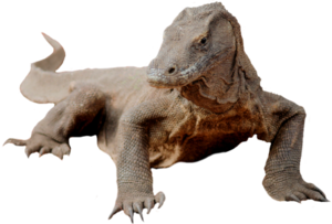 Komodo Dragon PNG Image PNG Clip art