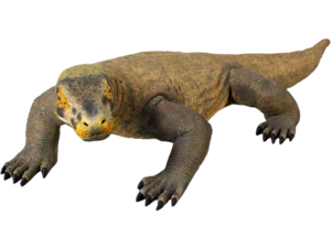 Komodo Dragon PNG Picture PNG Clip art