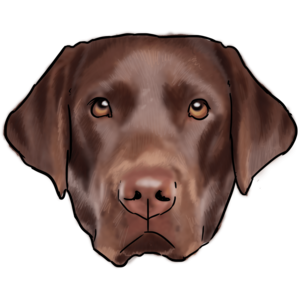 Labrador PNG Image PNG Clip art