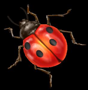Ladybird PNG Clipart PNG Clip art