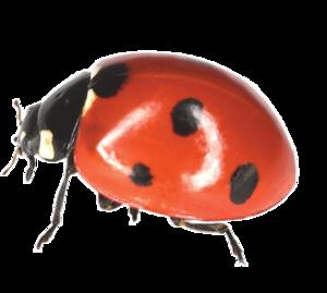 Ladybird PNG File PNG Clip art