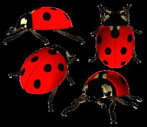 Ladybird PNG Photo PNG Clip art
