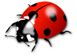 Ladybird PNG Pic PNG Clip art