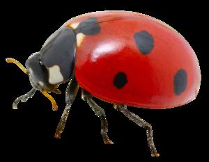 Ladybird PNG Transparent HD Photo PNG Clip art