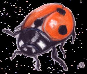 Ladybird PNG Transparent Image PNG Clip art
