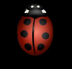 Ladybird PNG Transparent PNG Clip art