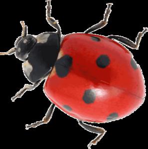 Ladybird Transparent Images PNG PNG Clip art