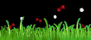 Ladybird Transparent PNG PNG Clip art