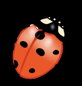 Ladybug PNG PNG Clip art