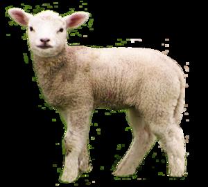 Lamb PNG File PNG Clip art