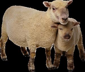 Lamb PNG Image PNG Clip art
