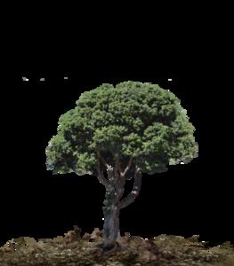 Landscape PNG Picture PNG Clip art