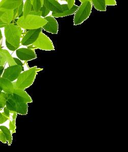 Leaf Frame PNG Image PNG Clip art