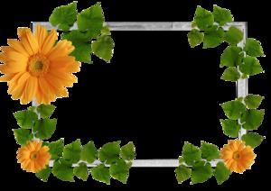 Leaf Frame PNG Photos PNG Clip art