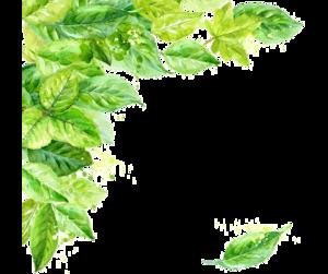 Leaf Frame Transparent Background PNG Clip art