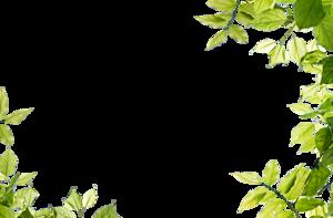 Leaf Frame Transparent PNG PNG Clip art