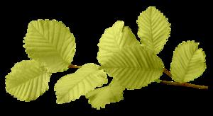 Leaf PNG Image PNG Clip art