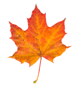 Leaf PNG Photo PNG Clip art