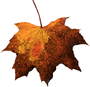 Leaf PNG Picture PNG Clip art