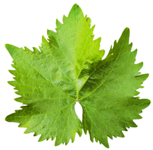 Leaf PNG Transparent Image PNG icons