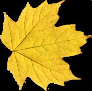 Leaf PNG Transparent Picture PNG Clip art