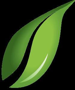 Leaf Transparent Background PNG Clip art