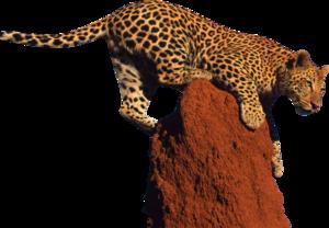 Leopard PNG Clipart PNG Clip art
