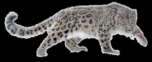 Leopard PNG HD PNG Clip art