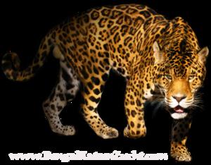 Leopard PNG Transparent Image PNG Clip art