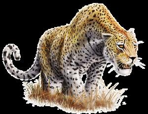 Leopard Transparent Background PNG Clip art