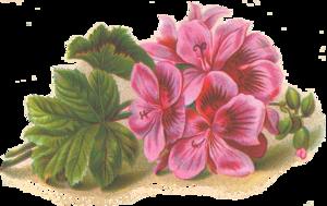 Lilac PNG HD PNG Clip art