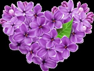 Lilac Transparent Background PNG Clip art